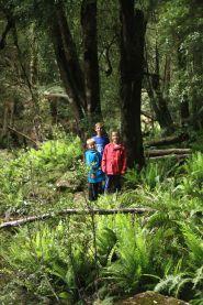 Forest near Wes Beckett Waterfalls