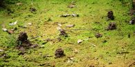 Burrowing Crayfish mounds