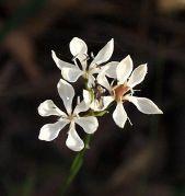 CNP Flower1