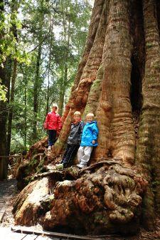 The kids at Big Tree