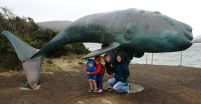 Whale Sculpture at Cockle Creek