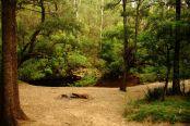 Yadboro camp - Clyde river