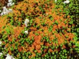 Colourful Mosses