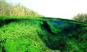 Ewens Ponds