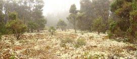 Lichen covered forest