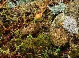 Fungus on Wombat pooh!