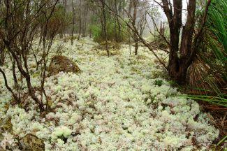 Goblin Forest Walk