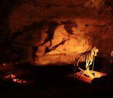 Marsupial Lion bones