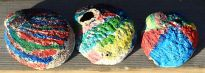 Painted Abalone