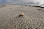 Shell on Bay of Fires Beach