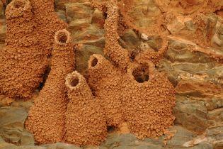 Birds nests in cliff