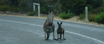 Roos on the road