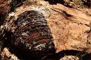 630m year old stromatolite formation