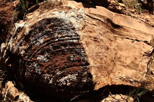 630m year old stromatolite formation