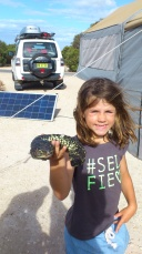 Tick infested shingleback