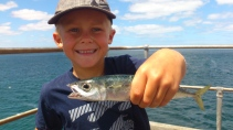 Tumby Bay Mackerel