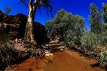 Youngoona waterhole