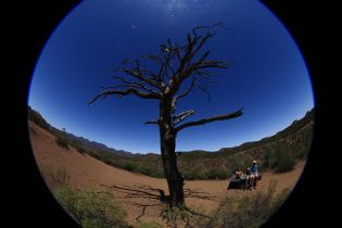 Wizened Tree