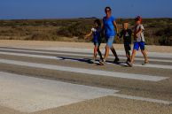 Zebra crossing in the Nullarbor!