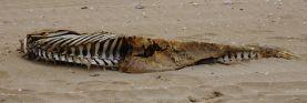 Dead Dolphin on the beach