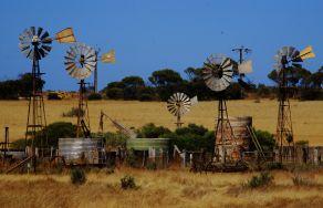 Penong Windmills