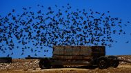 Starlings everywhere!