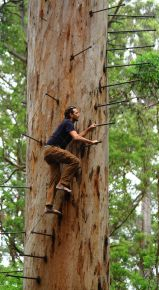 Barefoot up the Bicentennial Tree