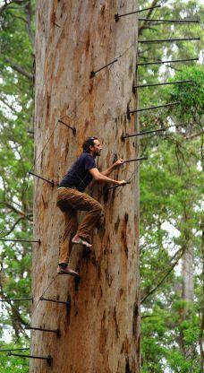 Barefoot up the Bicentennial Tree