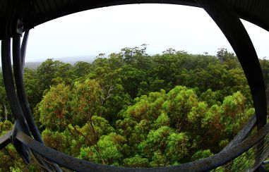 View over the canopy
