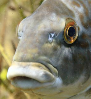 Fish face!