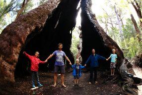 Tingle Tingle tree
