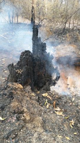 Trees still smouldering