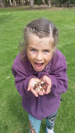 The free chocolate tasting samples