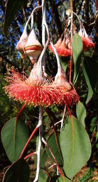 Kings Park flora
