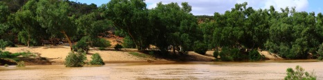 Murchison River in flood