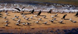 Birdlife at Cape Peron