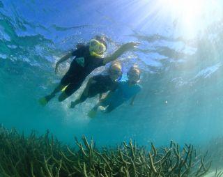 Snorkelling in Cape Range NP