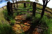 Old sheep mustering pens