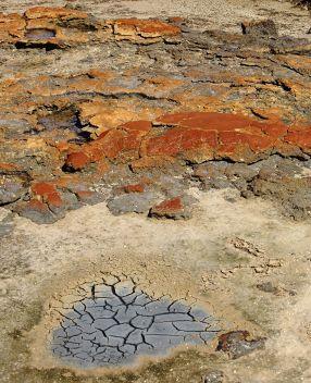 Stromatolites in the inter-tidal zone