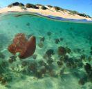 Jellyfish invasion