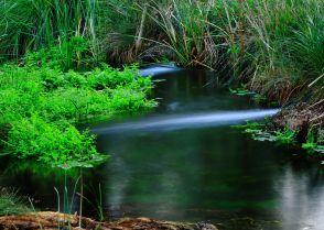 Millstream oasis