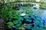 Millstream pool