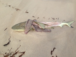 Victim of thoughtless fishermen at Coral Bay