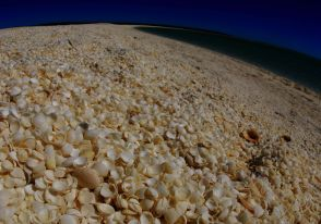 Shell Beach close up