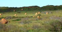 Waroora Station termite mounds