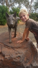 Red Dog - the Pilbara Wanderer