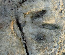 Gantheaume Point dinosaur footprint