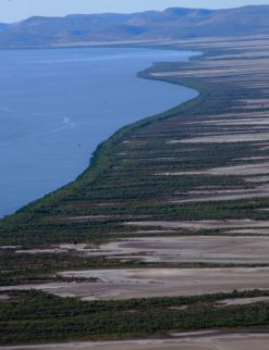 King River mangroves