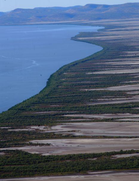 King River mangroves