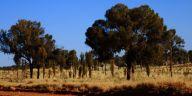 Mereendie Loop scenery